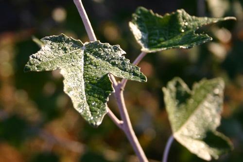 leaf by simon9924