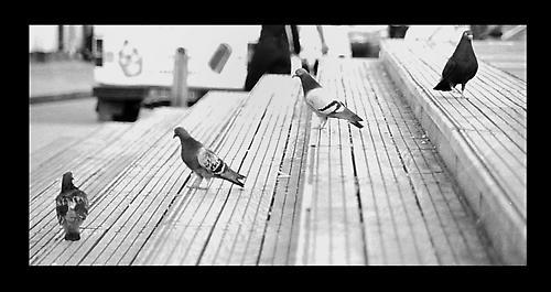 Watching the birdies... by aworan