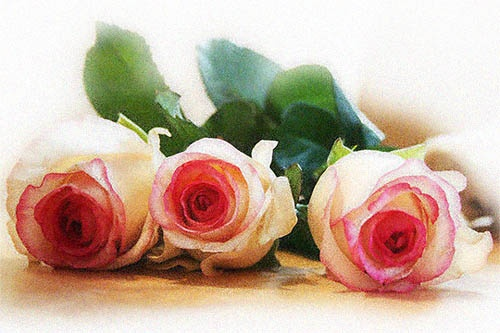 roses by jenroux