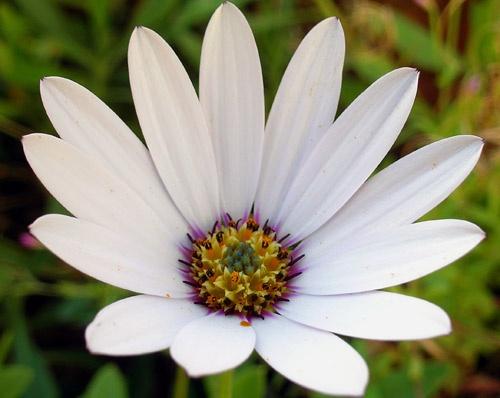 Flower by RubberBullets