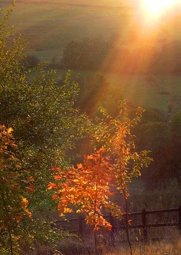 Light of life by iansamuel