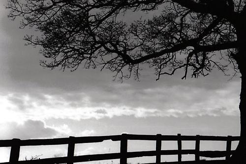 Storm Brewing by graymw