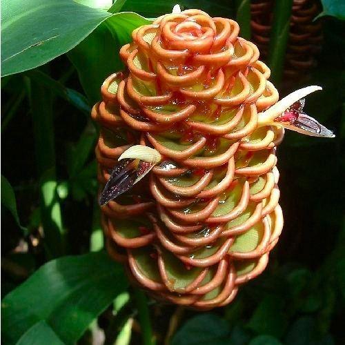 Cone Wonder by guzman