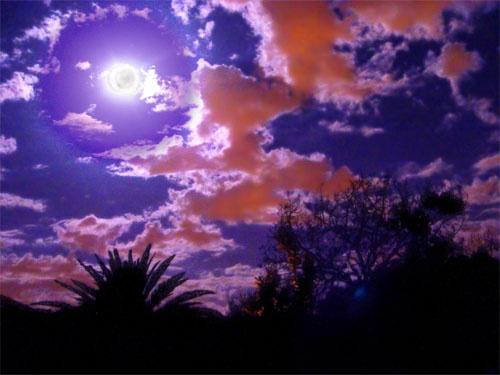 Wild Night by John-LS