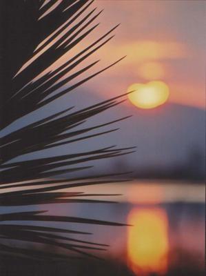 Palm Sunset by CraigSev