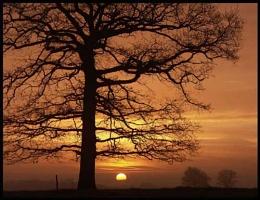Lindfield Sunrise