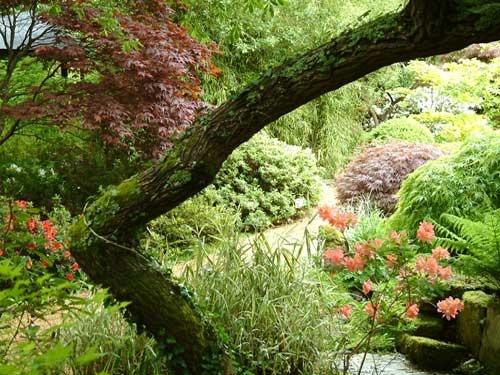 From a Japanese Garden by alex.allen