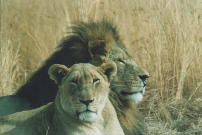 Great couple - Pilanesberg SA by CraigSev