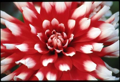 Red by minoltaandy