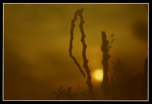 Broken Dawn by abbo