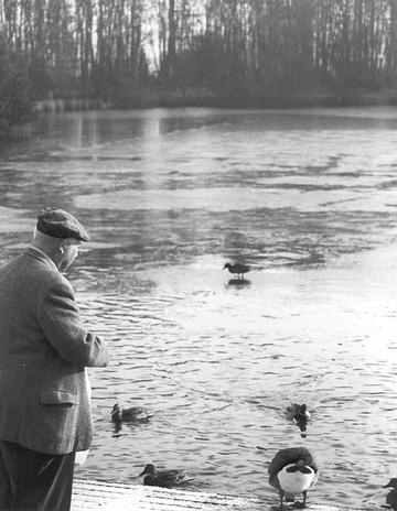 feedin\' the ducks by cal9