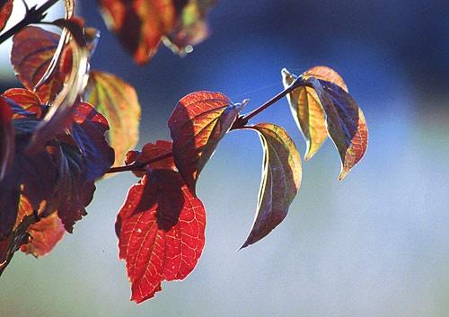 Autumn Coming by minoltaandy