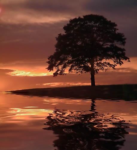 The Tree by cdm36