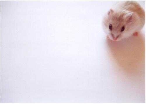Russian Hamster by 2lap