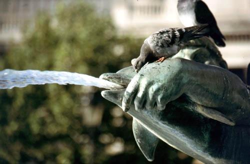 Trafalgar Square by Bucks