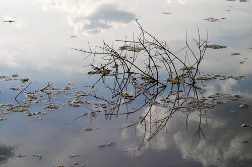 Mirror Image by John-LS
