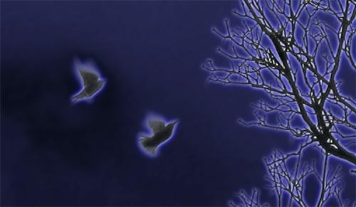 Neon Birds by blu