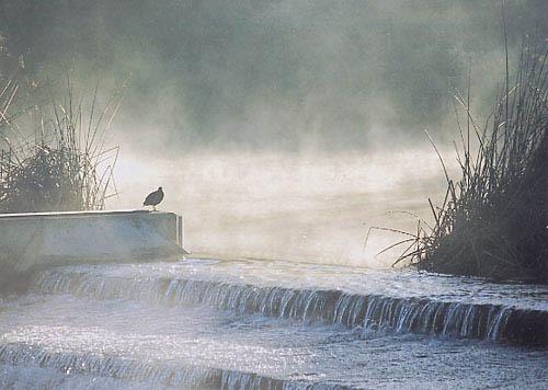 Bird on a Weir by whippetrider