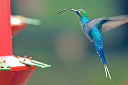 repost-hummingbird by jlwilliams1979