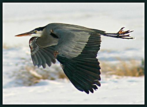 In flight by billma