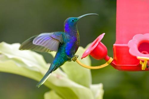 hummingbird 2 by jlwilliams1979