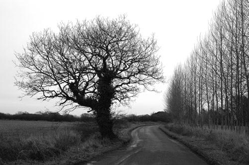 Tree study in B/W by gma