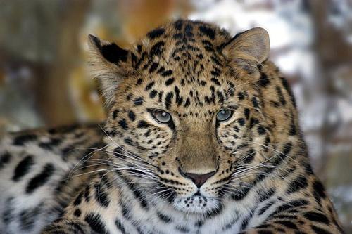 Cats eyes2 by tigertot