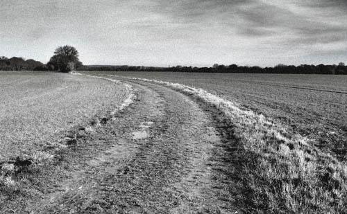 Farm Track by gazleton