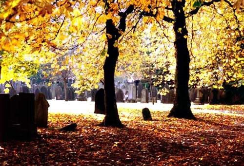 Autumn........... by mucharska
