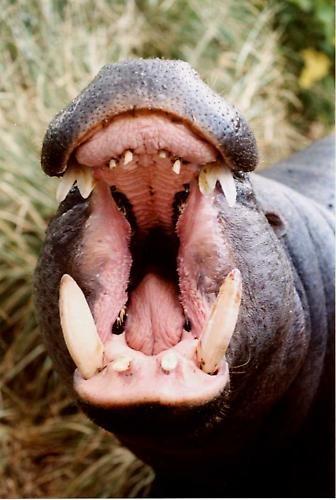 Hungry Hippos by j-rho