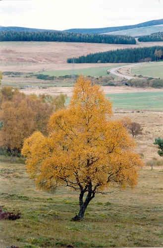Autumn Colour by stompie