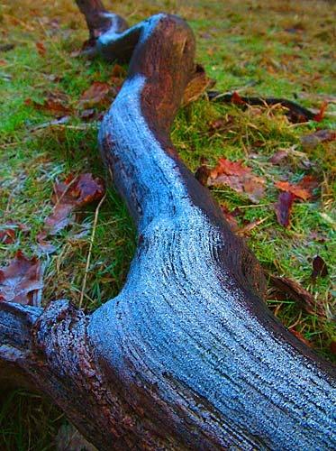 Icy Log by lobsterboy