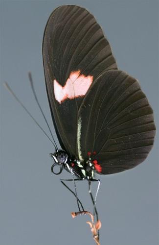 Butterfly by mattw