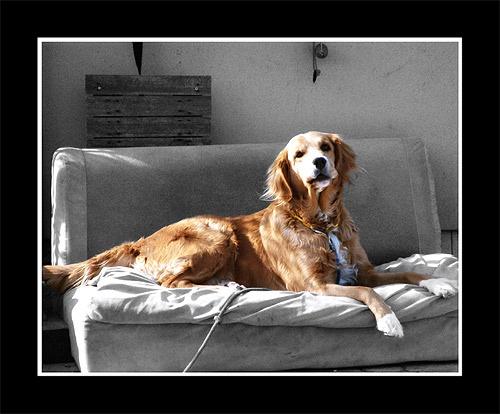 Reclining Dog by iamagoo