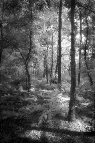 Summer in the Wood by gpwalton