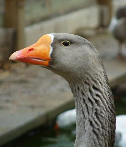 Daffy by pjc1882