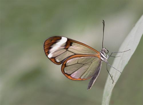 Glass Wing by mattw
