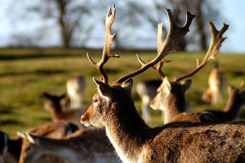 \'Anyone seen Kev the Deer?\' by nikguyatt