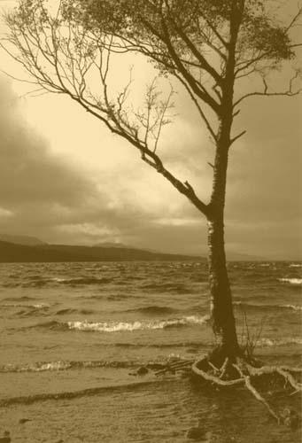 lone tree Rannoch by jimthistle73