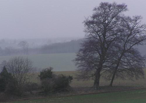 Misty Morning At Goodwood by gazleton