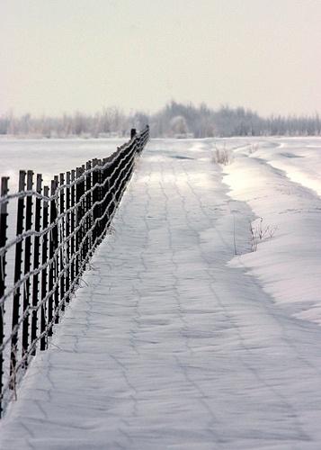 Fence Line by billma