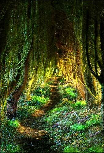 Cornish lane by billyji