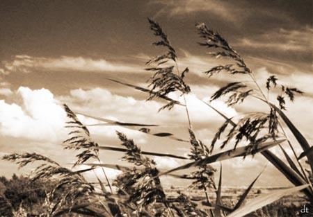 Grasses by tandav