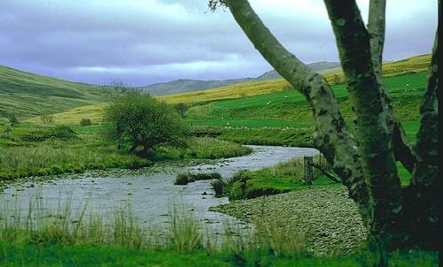 Afon Gain by bargee