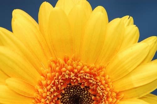 Flower power by jonnie