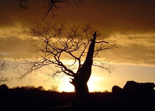 Sunset Tree by nanpantanman