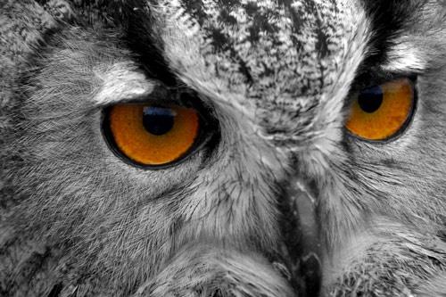 Bright Eyes by 220turbo
