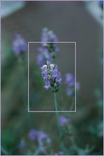 Lavender by Nyx