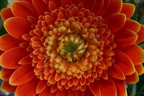 Orange by mkenney