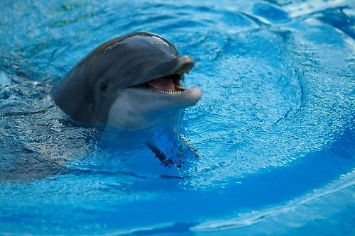 Another cheeky dolphin! by j-rho